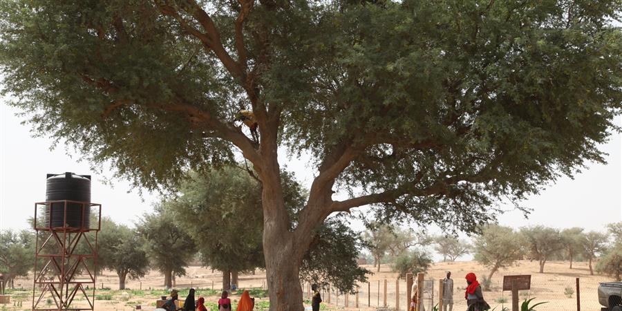 Pépinière à Marake Bagagi - Tarbiyya Tatali Association d'Echanges Culturels Ille et Vilaine Niger (AECIN)