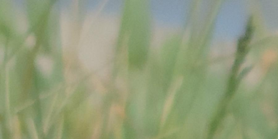 Guide photographique d'oiseaux communs d'Occitanie Vol 1. Le littoral - Aude Nature
