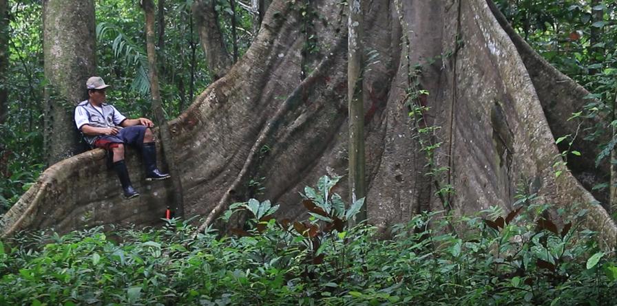 Conservation de la biodiversité en Amazonie - Biodiversité-Amazonienne