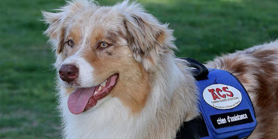 offrir un chien écouteur - les chiens du silence