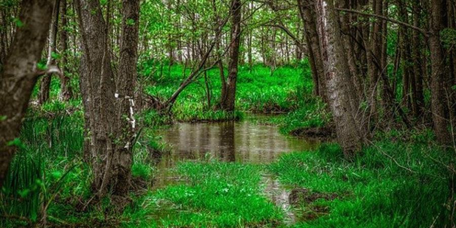 Center Parcs Roybon, projet climaticide - France Nature Environnement Auvergne-Rhône-Alpes