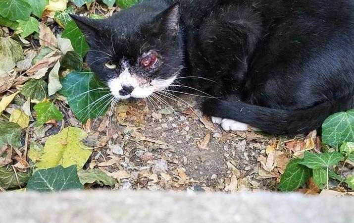 Gustave, chat des rues, blessé à l'oeil - AnimEgaux
