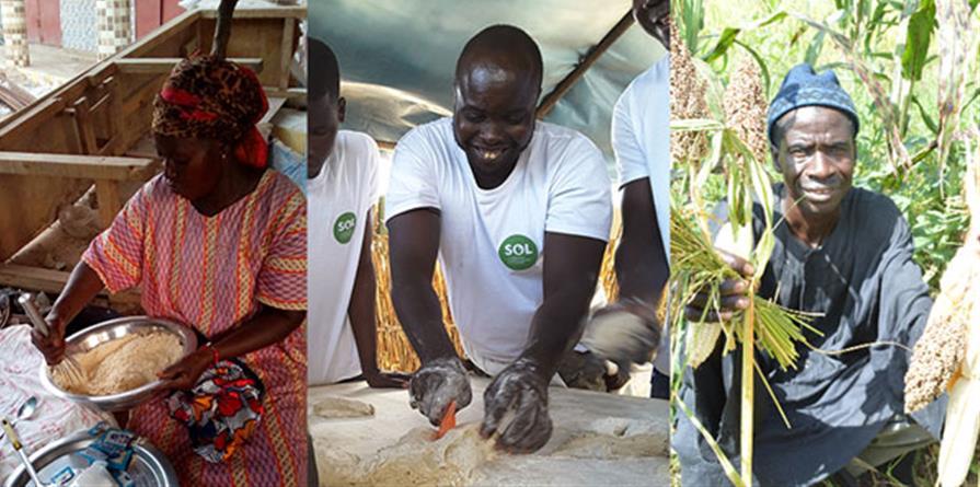 Valoriser les céréales locales au Sénégal (Phase 2) - SOL