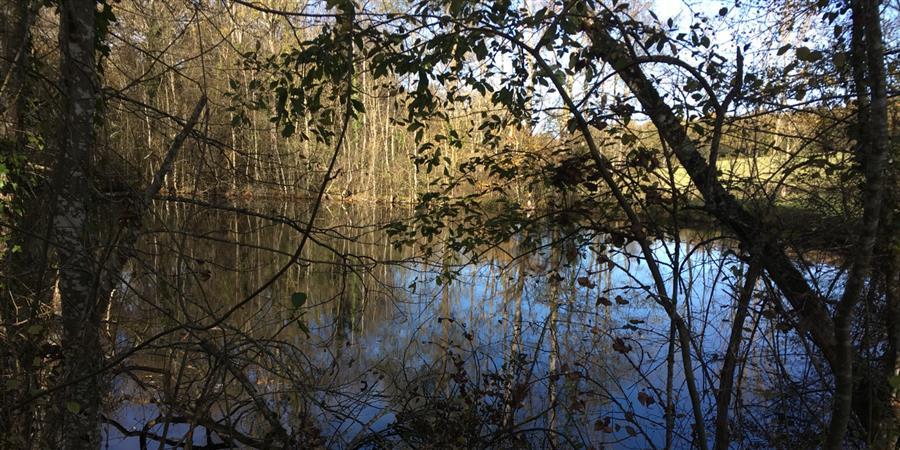 Restaurer et valoriser la biodiversité sauvage dans le Tarn - Envol Vert