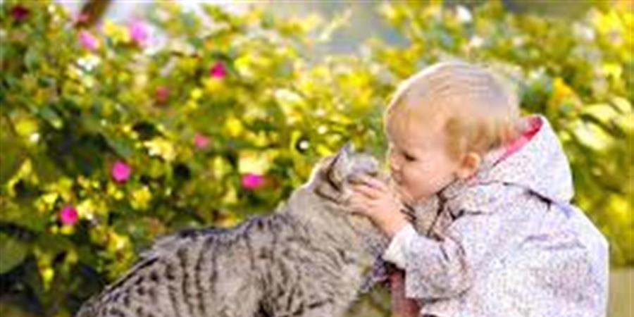 Un havre de paix pour les animaux - STOP VIOLENCE ANIMAUX
