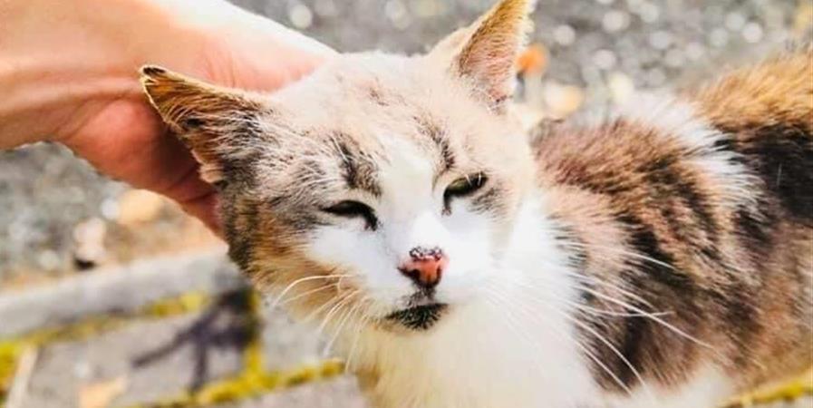 Aide aux soins vétérinaires Ida  - SOS Moustaches