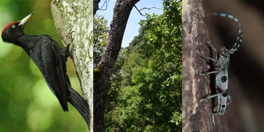 Acquisition de 20 ha de forêt pour les préserver et les gérer en libre évolution - LPO Savoie