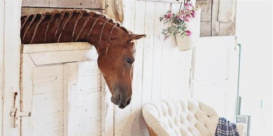 AIDE ASSOS - sharing horses