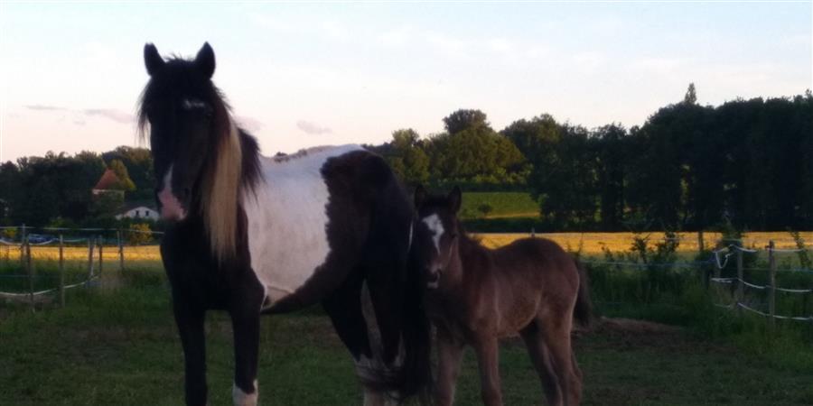 Les chevaux ont besoin de votre soutien - Cheval Nature de valatat