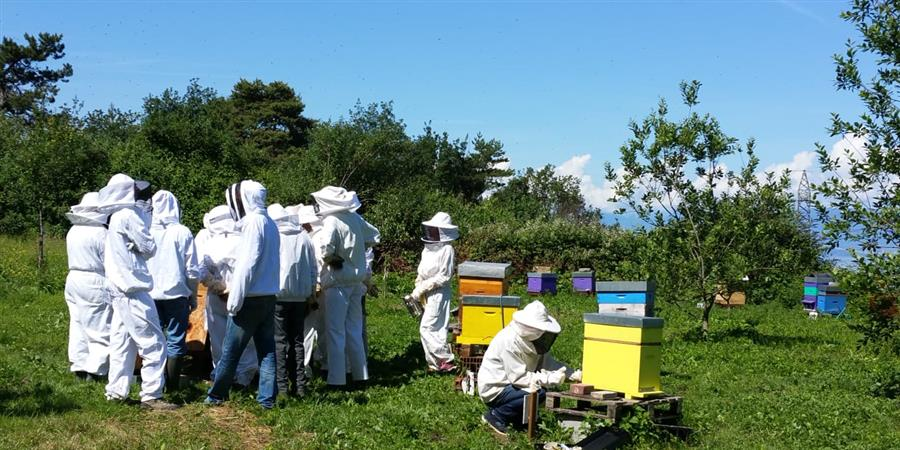 Une cabane pour les cours du rucher école - Rucher école du Chablais