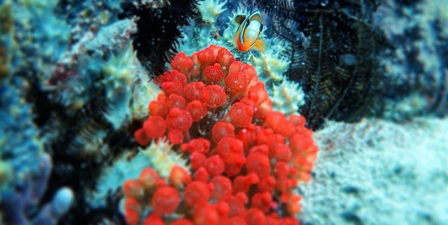 Preserver la biodiversité marine - Sumba Bisa