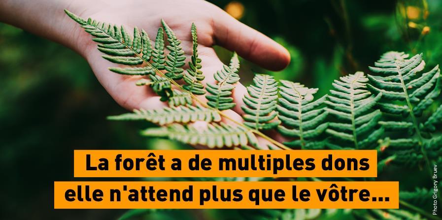 S'engager pour des forêts vivantes - Forets en vie