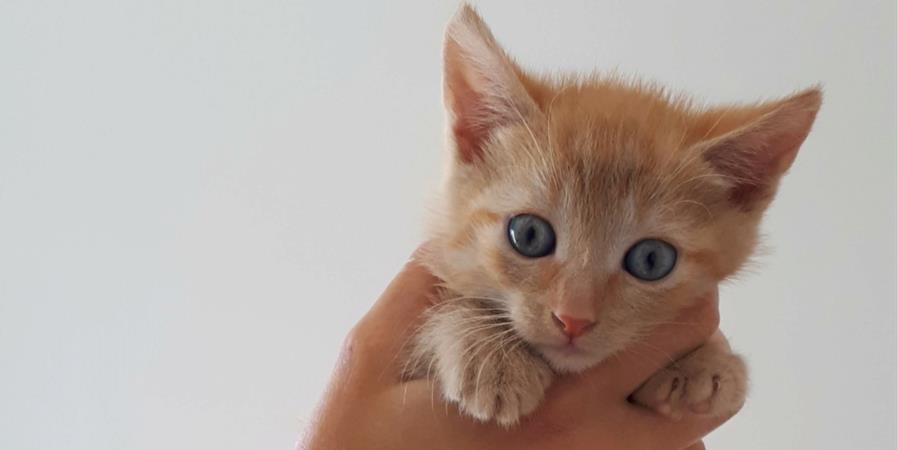 À l'aide, nous avons de grosses dettes vétérinaires à payer! - Ecole du chat libre de Toulouse