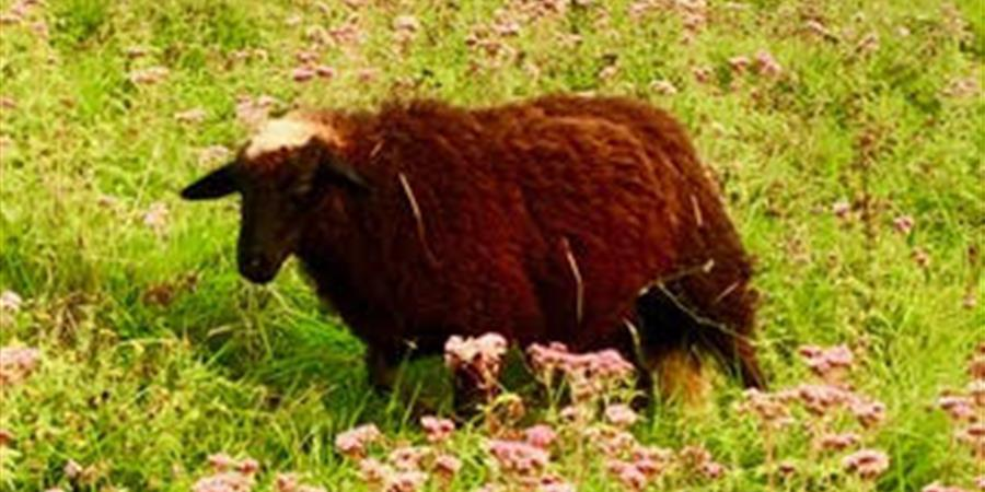 Parrainez Isaia - Animal cross