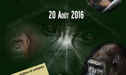 Journée mondiale des grands singes 2016 1ére édition en RDC - association gorilla rescue center