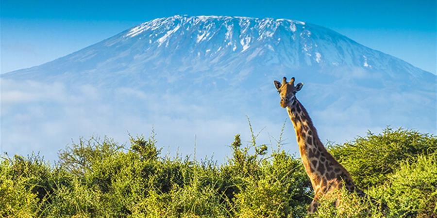 L'ascension du Kilimandjaro  - Respire ensemble contre la Mucoviscidose