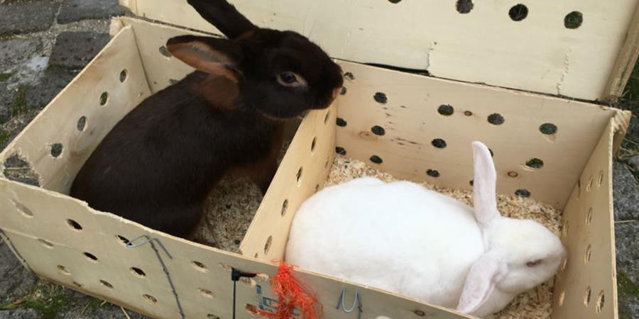 Aider les lapins du Salon de l'Agriculture - Animaux Séniors