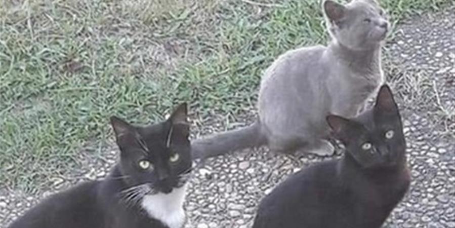 Les Chats De Malou
