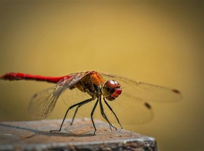 DON'nées naturalistes, mieux connaître pour mieux protéger - FRANCE NATURE ENVIRONNEMENT CENTRE - VAL DE LOIRE
