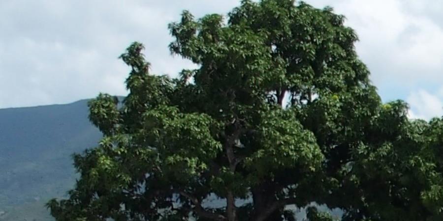 Permettre l'électrification solaire du lycée Jacques Roumain (Gros-Morne, Haiti) - CEFREPADE