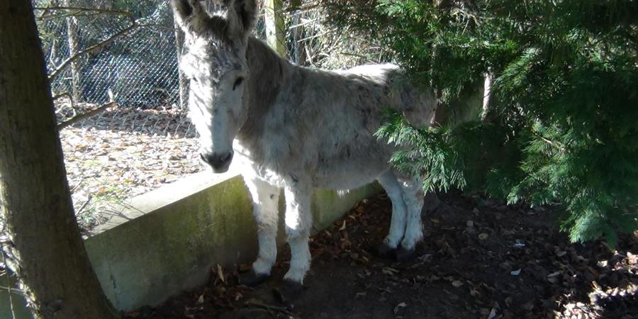 Parrainez l'âne Marius - Animal cross
