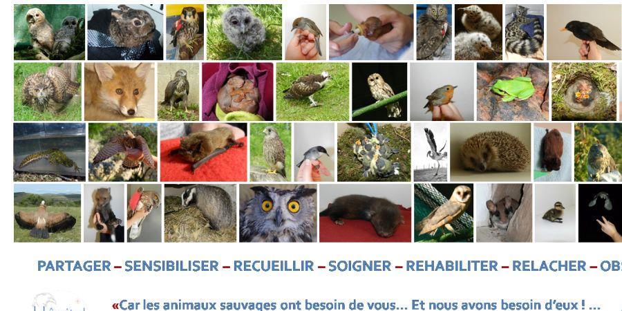 Un coup de pouce pour le projet Hôpital Faune Sauvage - Centre France - Cap Biodiversité France