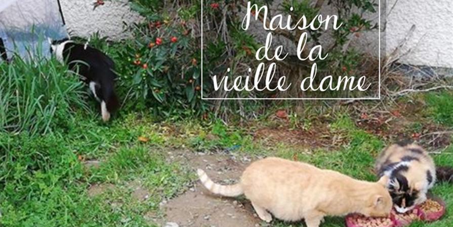 """Aide aux chats abandonnés du site """"MAISON DE LA VIEILLE DAME"""" - Association des p'tits korrigans"""