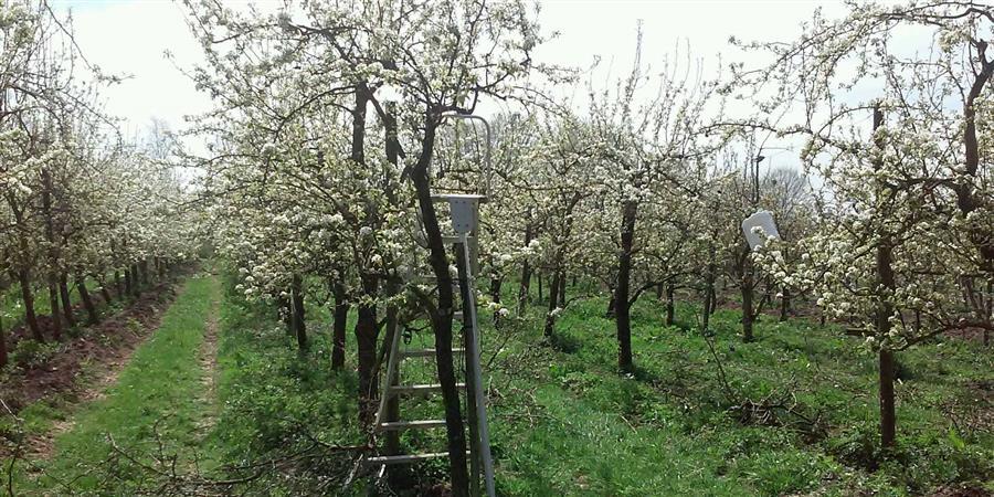 700 arbres pour  le  Verger Bio  d'Ohain - AMAP de la Tonnellerie