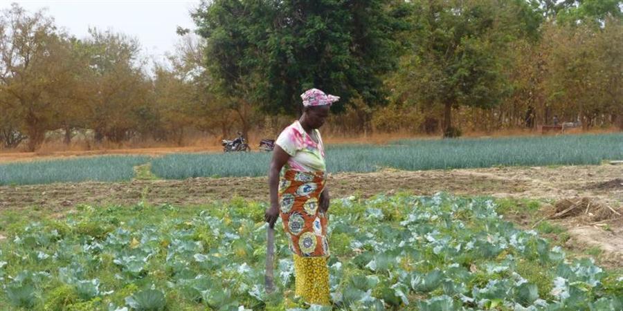 irrigation pour des jardins partagés - L'écho de l'ALPE