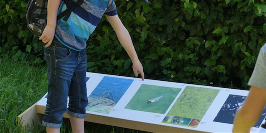 113 artistes pour la 20ème FEW - Association pour la Fête de l'Eau à Wattwiller