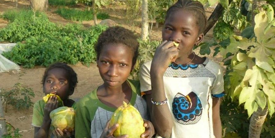 Des Cévennes au Pays Dogon: un enjeu commun, l'EAU - Experts-Solidaires