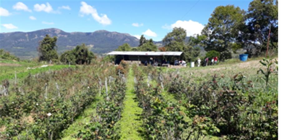 FAL33 Projet agro-écologique Mérida - Venezuela - France Amérique Latine Comité Bordeaux Gironde