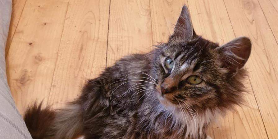 Soutien pour nos chats malades - PAS DE CHAT SANS TOIT