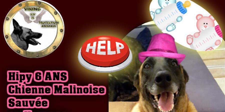 SAUVETAGE HIPY CHIENNE MALINOISE ET SES CHIOTS - Viking SV2L Protection Animale
