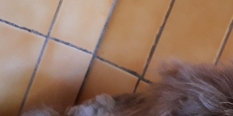 Aidez-nous à soigner notre petite chatte Plumette ! - SPA de Savoie