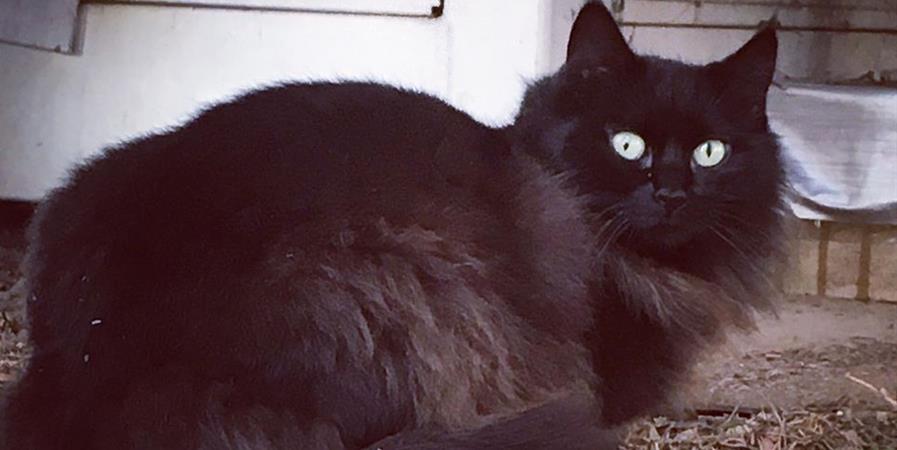 Collecte de bon miam pour les chats errants - Minous Magiques