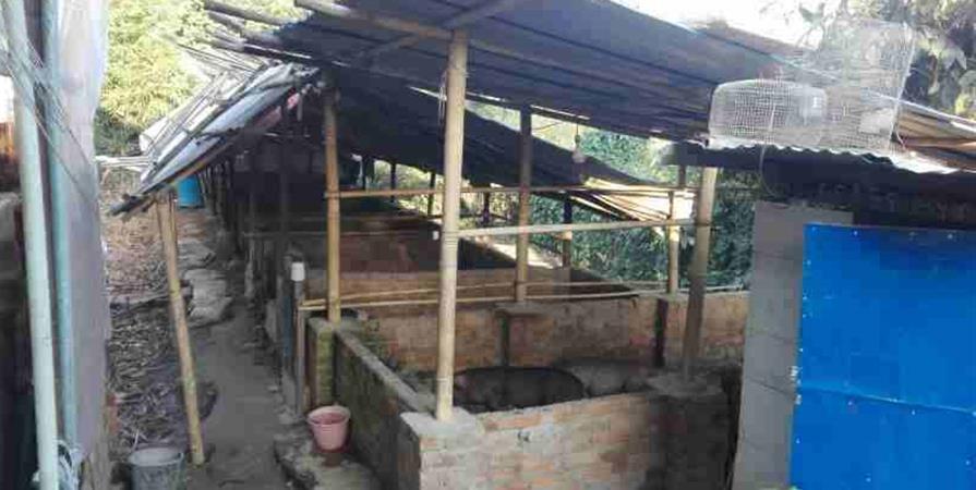 kit construction - retaper la porcherie - Aide aux orphelins de Birmanie
