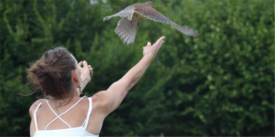 Financer les fenêtres du nouveau centre de soins pour la faune sauvage - ENVOL