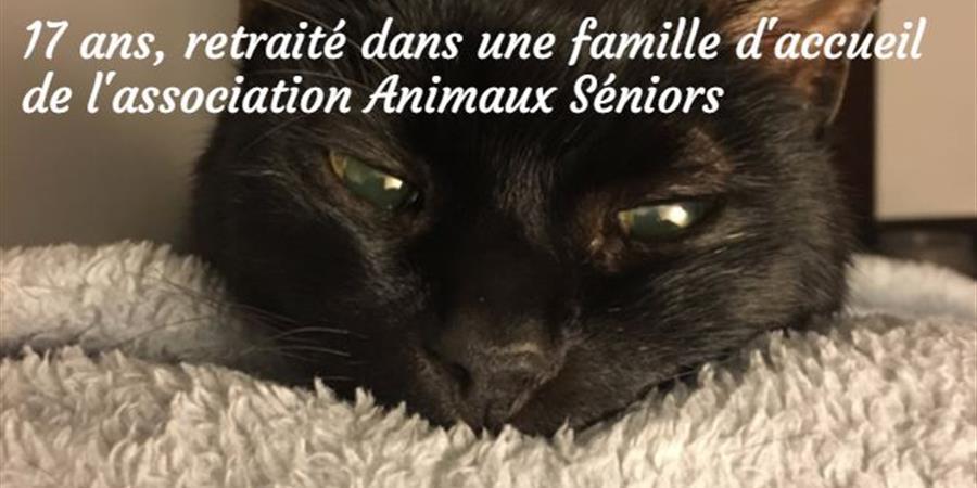 Aidons Roudoudou qui se bat contre la maladie - Animaux Séniors