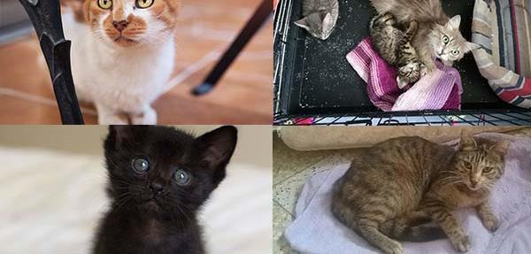 Aide aux soins de nos protégés - L'école du Chat d'Ollioules