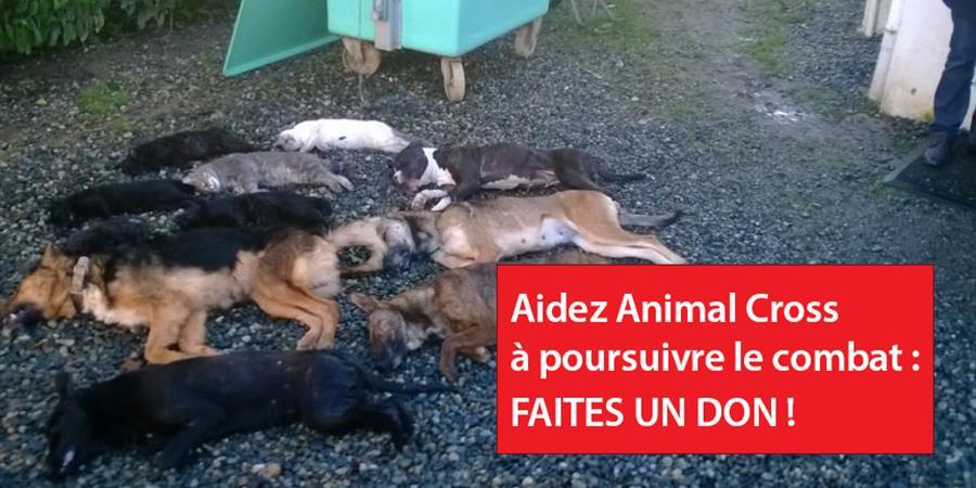 Faites un don à Animal Cross - Animal cross