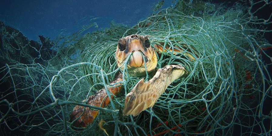 """""""Agir pour la biodiversité marine """" - DEPTH'S GUARDS"""