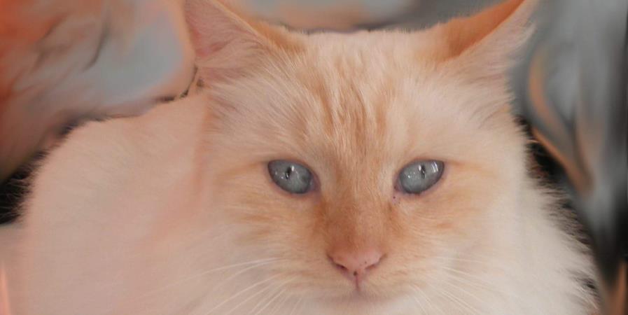 Un coup de pouce pour l'organisation du Rock 'N Miaul 2021 - Ecole du chat libre de Saintes
