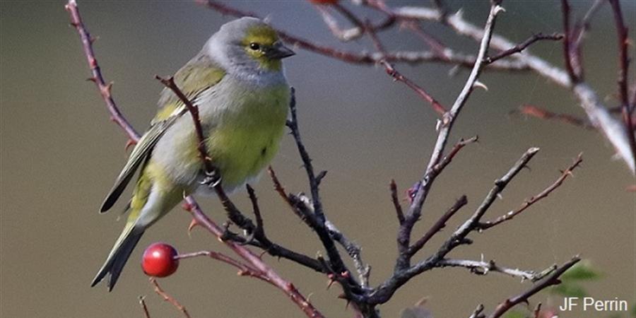 Guide photographique des oiseaux communs d'Occitanie. Volume 2 - Aude Nature