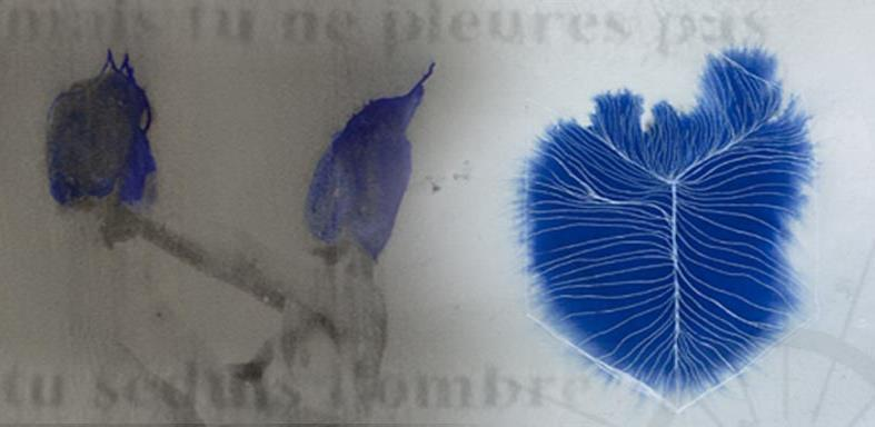 Edition de deux recueils de poésie visuelle - Héliotropismes