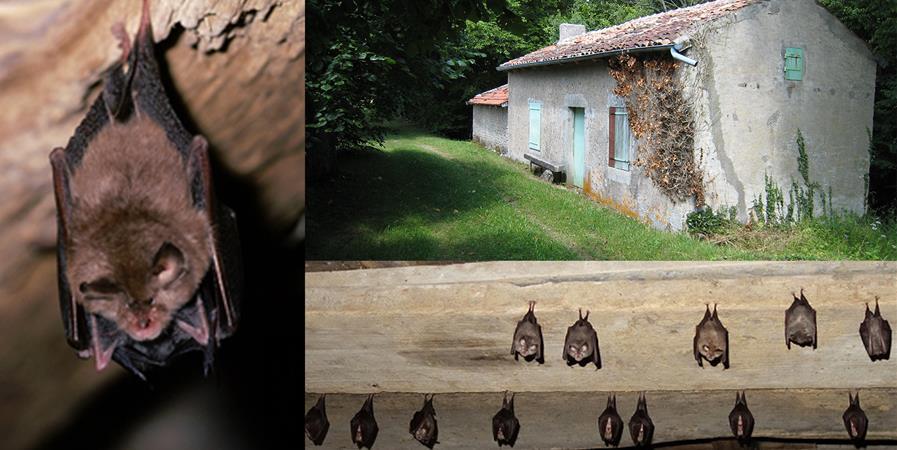 Une maison pour le Petit Rhinolophe - Conservatoire d'espaces naturels de Lorraine