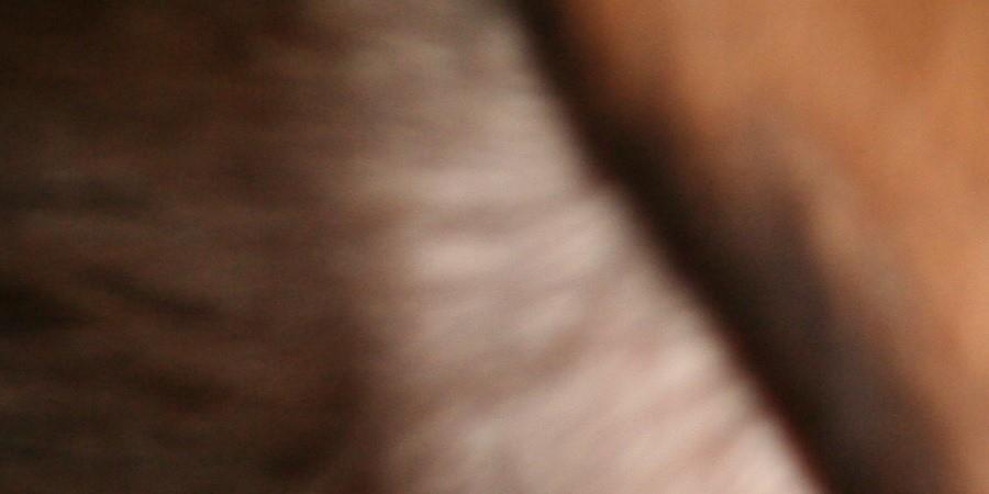 Atelier 30 juillet - Traite des chèvres - FERME D'ECANCOURT
