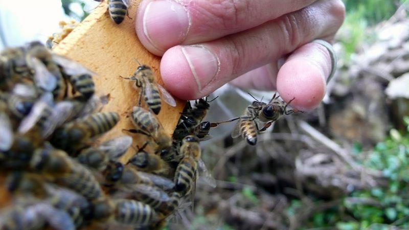 Stage d'initiation à l'apiculture 7-8 septembre - L'ABEILLE MACHINE