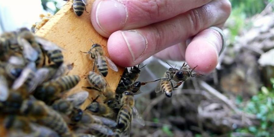 Stage d'initiation à l'apiculture 27-28 juillet - L'ABEILLE MACHINE