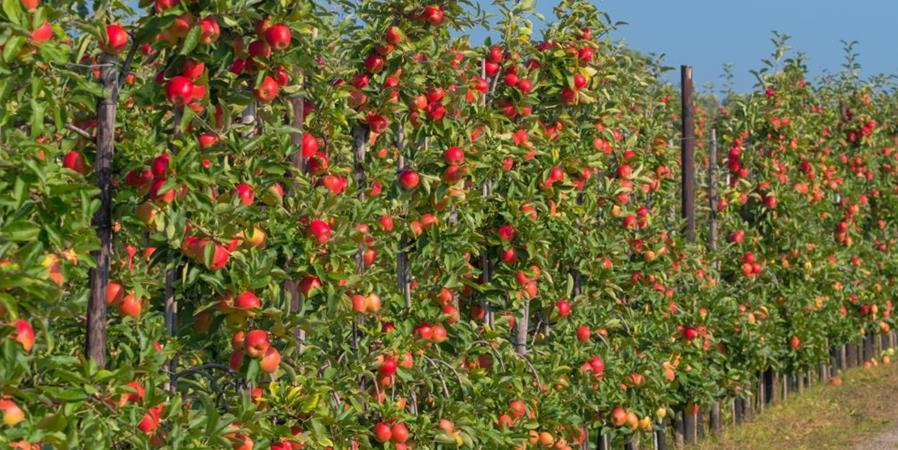 Création d'un jardin d'un restaurant local - fruitiers et aromatiques - Ecos